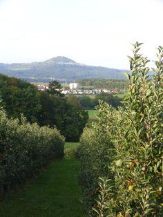 Schlater Apfelbäume mit Hohenstaufen