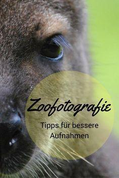 Fotografieren im Zoo: 9 Tipps für bessere Aufnahmen