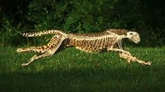 Image result for most speed animal in the world