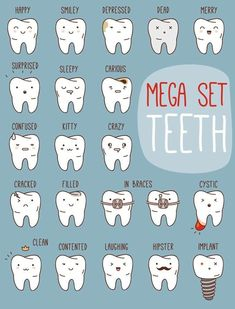 Tooth Types #Dental #Humor