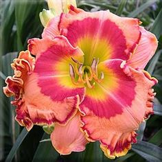 beautiful flowers names Beautiful Flower Names, Beautiful Flowers, Unusual Flowers, Rare Flowers, Daylily Garden, Lilies Of The Field, Hibiscus Flowers, Hawaiian Flowers, Day Lilies