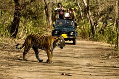 Checkout Wildlife destinations in India