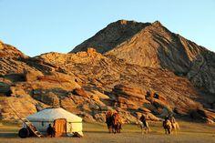 Le Mongol - Des chevaux Mongols près d'une yourte