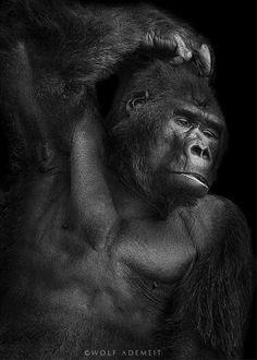 The art of ANIMALS:  Wolf Ademeit, Maravillosos Retratos en Blanco y Negro de Animales de Zoológico | FuriaMag | Arts Magazine