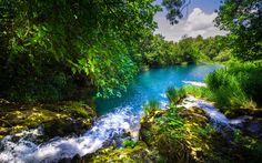 壁紙をダウンロードする 夏, 森林, 川, 美しい自然, Krka川, クロアチア, Krka国立公園