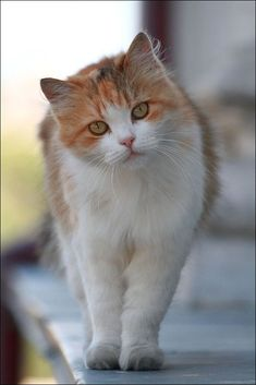 \Cats seem to go on the principle that it never does any harm to ask for what you want.\ --Joseph Wood Krutch