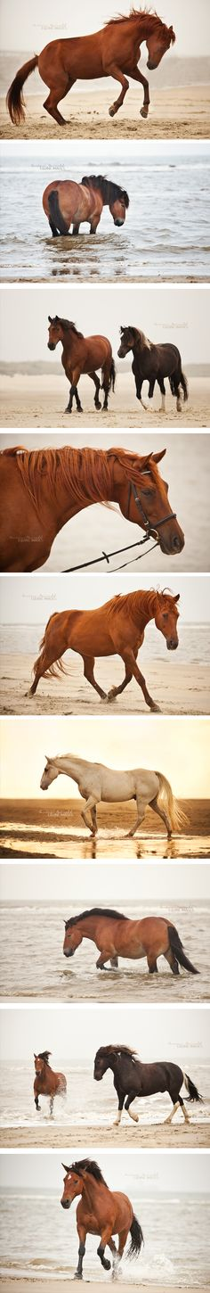Horses playing in the water. They love it! Chestnut horse on the beach ‹ Carina Maiwald – EQUINE IMAGES / Pferdefotografie