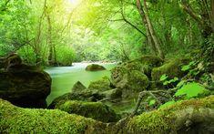 vegetation - Cerca con Google