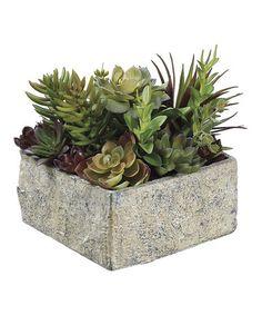 Look what I found on #zulily! 8'' Succulent Garden #zulilyfinds