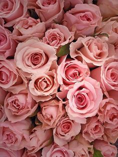 Pink roses #valentines #sweetlove #adore #sayitwithflowers