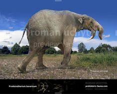 Prehistoric World, Prehistoric Creatures, Blue Sky Studios, Small Elephant, Extinct Animals, Animals Images, Fauna, Predator, Mammals