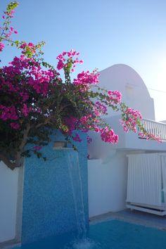 Loved these beautiful flowers on Santorini Island - Greece