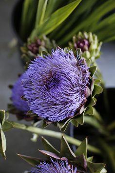 "botanic-art: ""Artichoke flower ©Botanic Art """