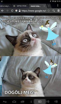 Grumpy Cat Humor, Cat Memes, Funny Cats, Bff, Haha, Comedy, Cute Animals, Jokes, Chistes