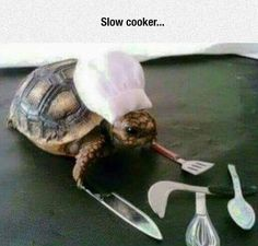 Slow Cooker funny cute animal humor turtle cooking s funny animals