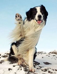 Windy high five All Dogs, I Love Dogs, Puppy Love, Blowin' In The Wind, Windy Day, Windy Weather, High Five, Beautiful Dogs, Mans Best Friend
