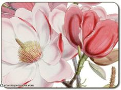 """Jason Campbell's Magnolia Placemats - Set of 4 (Large) by Jason. $37.95. Durable, heat sealed surface. Heat resistant to 225ºF. Size: 17"""" x 11.5"""". Gift Boxed. Hardboard, Cork backed. Attractive top quality placemats by Jason of New Zealand. The hardboard and cork is sourced from renewable resources. The edges are heat sealed, the surface is smooth and the cork backing will protect your table. Just wipe clean with a damp cloth."""