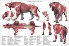 Smilodon anatomy model, and smilodon anatomy chart, available at www.junsanatomy.com