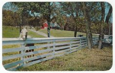 Postcards - United States #  800 - Herbster Farm, Wisconsin