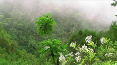 The Laurissilva Forest, Madeira Nature Park  Madeira Island (Portugal)- Travel Europe Guide