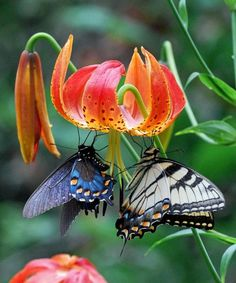 Life is short. If you doubt me, ask a butterfly. Their average life span is a mere five to fourteen days. Ellen DeGeneres