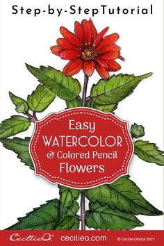 Easy watercolor art with a step-by-step tutorial for the beautiful red Mexican sunflower. Focus on the whole plant. Download FREE outline to trace. Watercolor Beginner, Watercolor Paintings For Beginners, Watercolor Tips, Watercolour Tutorials, Watercolor Techniques, Watercolor Flowers, Simple Flowers, Red Flowers, Leaf Outline