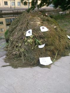 Fun with weed! remains of canal dredging, hacked... 21/07/13