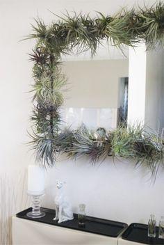 decor, idea, plants frame, airplant, wall mirrors, succul, diy, garden, tillandsia air plant