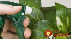 Pridajte jednu lyžičku tohto zázraku ku stonke vašich rastlín a sledujte, čo sa stane!