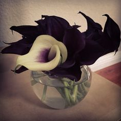 My take on spooky Halloween flowers. It helps if you think about the fact that soon they'll be dead. Halloween Wedding Flowers, Classy Halloween Wedding, Spooky Halloween, Halloween Themes, Wedding Looks, Fall Wedding, Scary, Creepy, Wedding Flower Inspiration