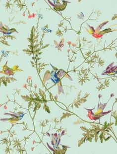 Beautiful vintage-style hummingbird wallpaper by Cole and Son - just gorgeous. Lovehome.co.uk