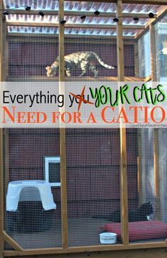 Everything You Need for A Catio Have your cats been trying to escape to the great outdoors? Maybe it's time to build them an outdoor cat enclosure! Here's a list of everything you need for a catio! Diy Cat Enclosure, Outdoor Cat Enclosure, Reptile Enclosure, Cat Pen, Outdoor Cats, Outdoor Cat Kennel, Cat House Outdoor, Cat Room, Cat Condo