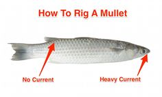 how to rig a mullet