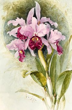 Orchids Counted cross stitch pattern in PDF by Maxispatterns