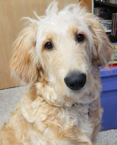 Safe!! Adoptable Dog: Maxxi - What a face <3