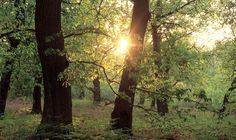 Sherwood Forest National Nature Reserve - Forest in Edwinstowe, Newark and Sherwood - Experience Nottinghamshire