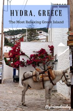 Hydra, Greece- the Most Relaxing Greek Island near Athens. Including tips on where to eat, beaches, hikes, and what to do.