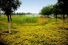Tianjin Qiaoyuan Wetland Park - Sustainable Architecture