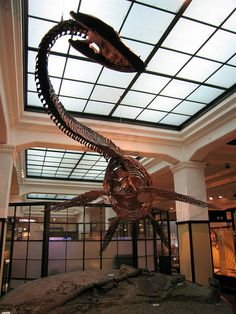 Plesiosaurus at the Tokyo National Museum, Japan; (I should just start a board of reasons to go to Japan!)