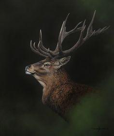 Edelhert 50 x 60 cm Wildlife Paintings, Wildlife Art, Animal Paintings, Animal Drawings, Deer Photos, Deer Pictures, Large Animals, Animals And Pets, Cute Animals