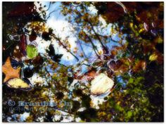 """In Reflection"" © Lori J. Southall dba Bramble On Digital Art + Photography"