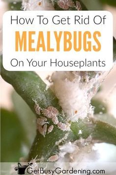 As far as possible, this post will concentrate on pest control tips that would assist keep away as much pests as you can. Some of the advises provided here will deal on specific pests but some may … Hoya Plants, Jade Plants, Bamboo Plants, Orchid Plants, Poisonous Plants, Orchids Garden, Plant Bugs, Plant Pests, Garden Pests
