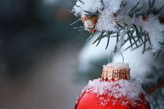 Image de christmas, snow, and tree