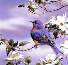 I love to hear the birds sing! Pretty Birds, Beautiful Birds, Comics Und Cartoons, Art Mignon, Bird Drawings, Bird Pictures, Cross Paintings, Colorful Birds, Bird Art