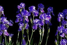 Photo in Davis Portfolio - Google Photos