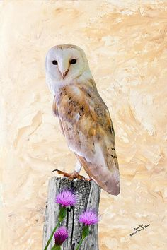 Barn Owl on Post by Wildlife and Animal Artist, Iain S Byrne