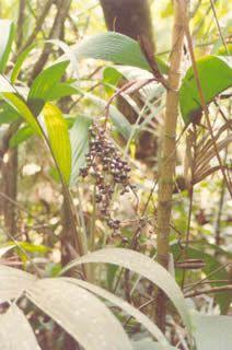 Magia das Plantas: Ecologia das plantas