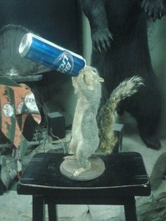 Squirrel Taxidermy Mount