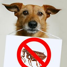 5 Solutions For Natural Flea Control | Care2 Healthy Living