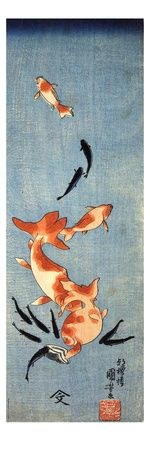 Gold Fish Giclee Print at AllPosters.com